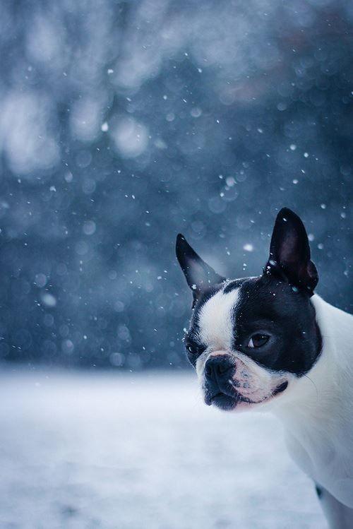 I Abhor the Snow!