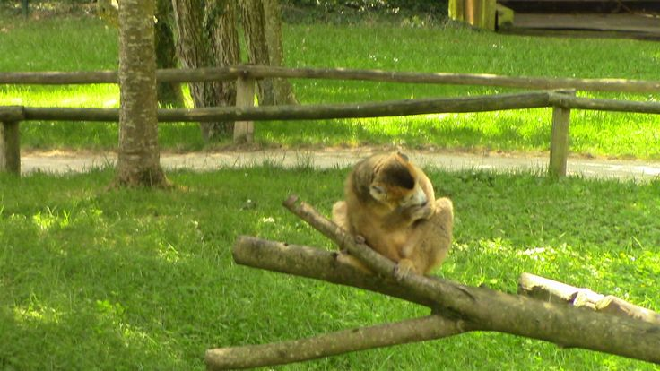 Chateau Bourbansais Zoo
