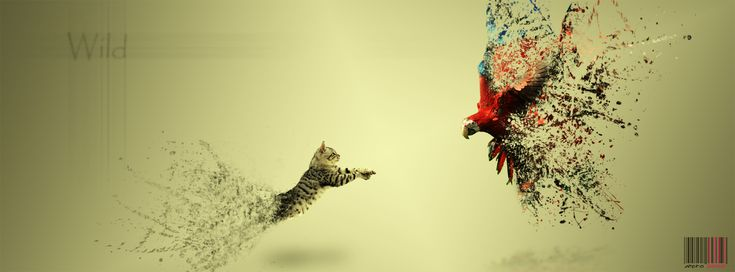 50 Best Facebook Cover Photos:
