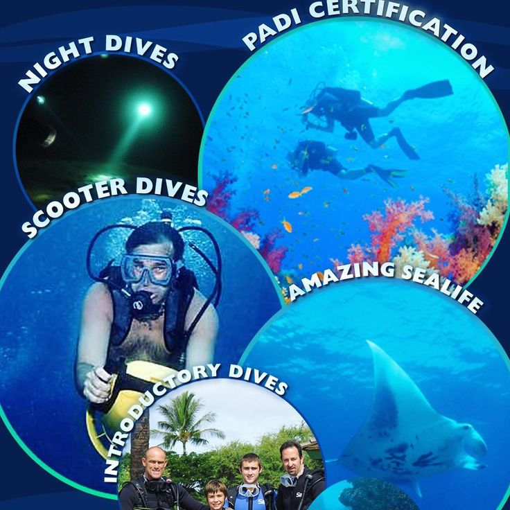 PADI Certification? introductory dives? Dive tours? Jet Dives? Night dives? Yes yes and yes! Call me to discuss your Maui Scuba Adventure 808-250-5494 #maui2017 #maui #whattodoinmaui #mauiadventures #mauiscuba #scuba #ocean