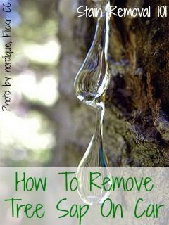 Here are quite a few tips for how to remove tree sap from car exteriors {on Stain Removal 101}
