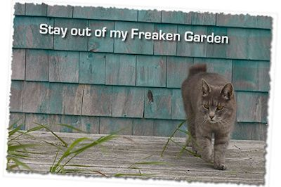 Cat repellent recipes submitted by our readers that you can make at home. Lots more natural cat deterrent tips available at Cats Away by clicking here