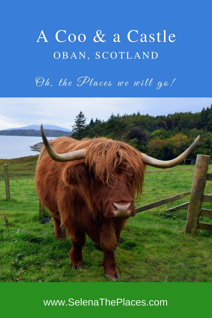 Oh, the places we will go!: A Coo & a Castle in Oban, Scotland