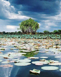 Wetlands Kakadu National Park Northern Territory Australia