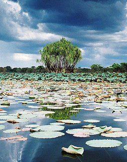 Wetlands Kakadu National Park Northern Territory Australia