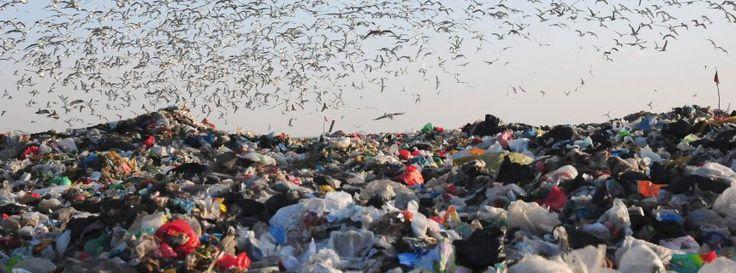 Prognose: Müllausstoß wird noch Jahrzehnte weiter wachsen