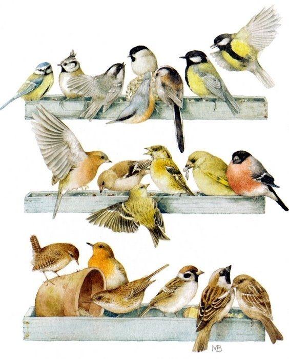 Коллекция картинок: Иллюстрации Bastin Marjolein 6 (птички часть 2)