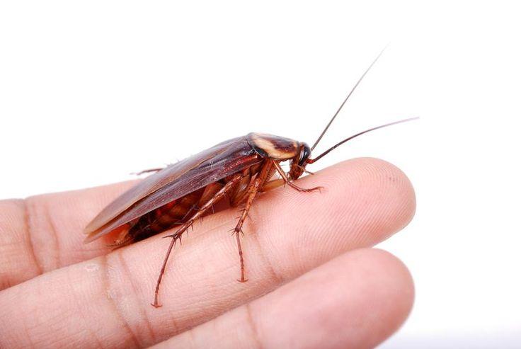 Тайская школьница придумала простой способ борьбы с тараканами