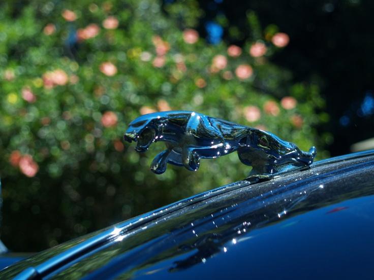 Jaguar leaper at Cape Town Classic Car show