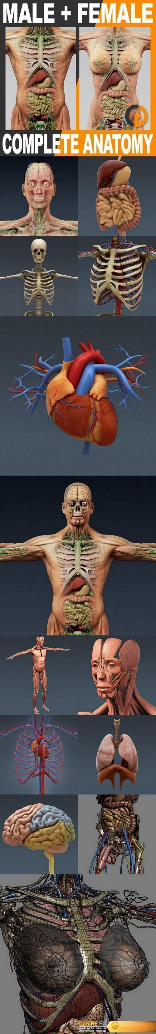 Human Male and Female Complete Anatomy - Body, Muscles, Skeleton, Internal Organs and Lymphatic #3D Model http://www.desirefx.me/human-male-and-female-complete-anatomy-body-muscles-skeleton-internal-organs-and-lymphatic-3d-model/