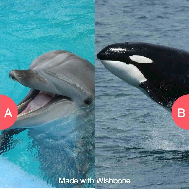 They are both dolphins