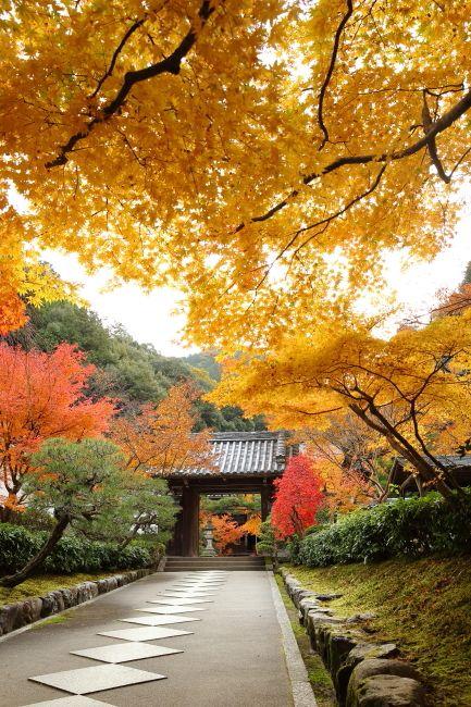 Kyoto, Japan「京都の四季」