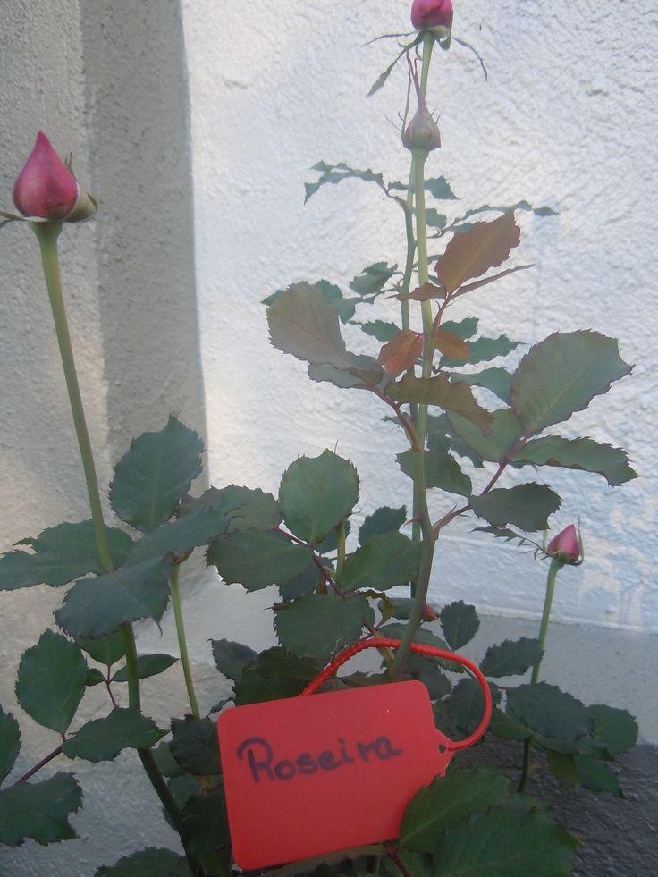 Etiquetas para identificação de plantas