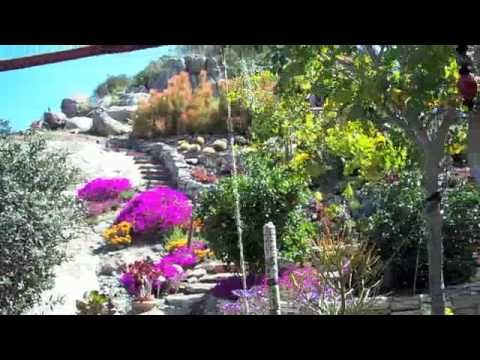 Mike and Mimi's Cactus Garden - YouTube