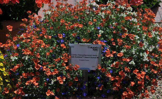 Colorado State University's Annual Flower Trial Garden's list of winning flowers