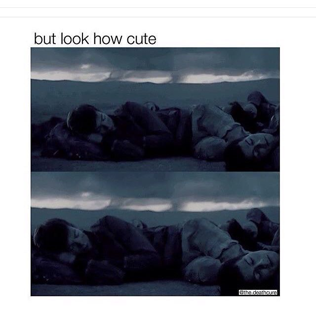 ASDFGHJKL cutie newtie<< and then u just see Thomas's face near Newt's leg :3