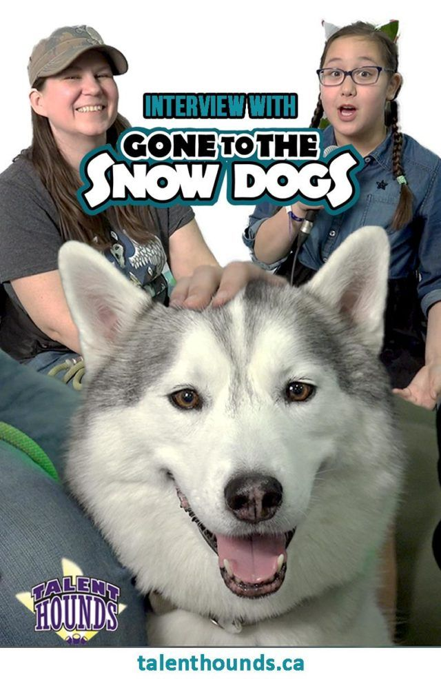 Do Huskies Make Good Pets Gone To The Snow Dogs Interview Snow