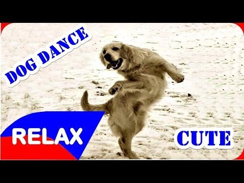 Top 10 funny videos dogs dance - Funny video dogs 2015 - Relax channel - YouTube