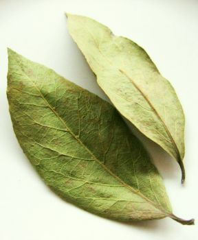 Se pun 5 g de frunze de dafin la fiert cu 300 ml de apă timp de 5 minute. Apoi ceaiul cu tot cu frunze se mai lasă la infuzat într-un termos 3-4 ore. După această perioadă, ceaiul se strecoară și se bea cu înghițituri mici, pe durata întregii zile.