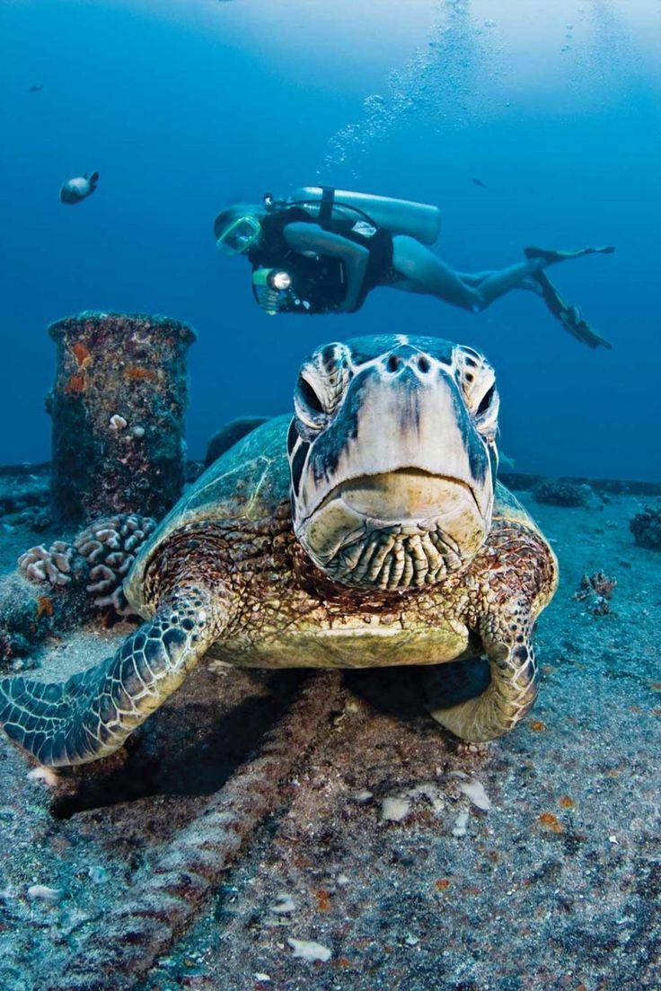 Scuba Diving http://www.deepbluediving.org/six-epic-scuba-dives-for-every-adventurer/