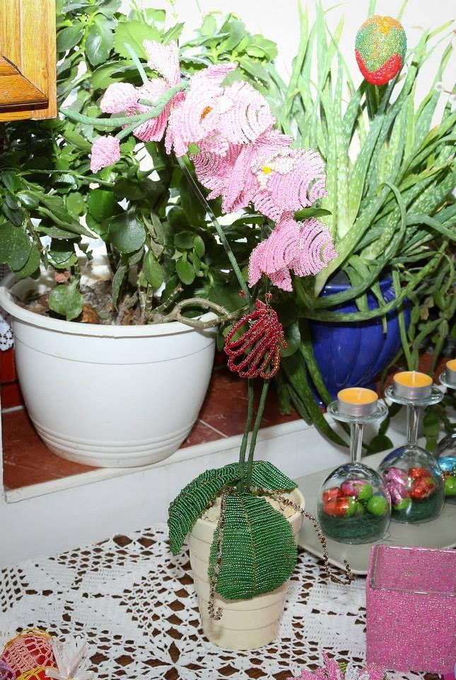 bead orchidea