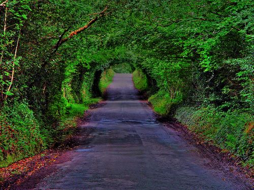 Tree Tunnel, Derry, Ireland – Jetset Lust