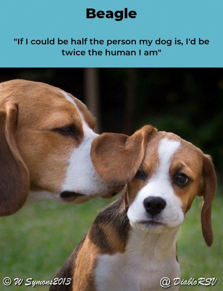 Visit Our Internet Site For Even More Information On Beagles It