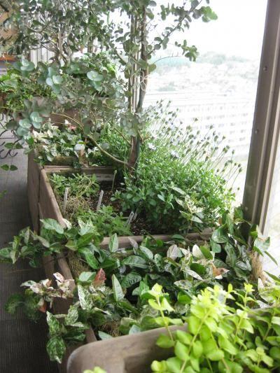 糟屋郡 ベランダコンテナガーデン - 早蕨さわらび  庭と緑の空間