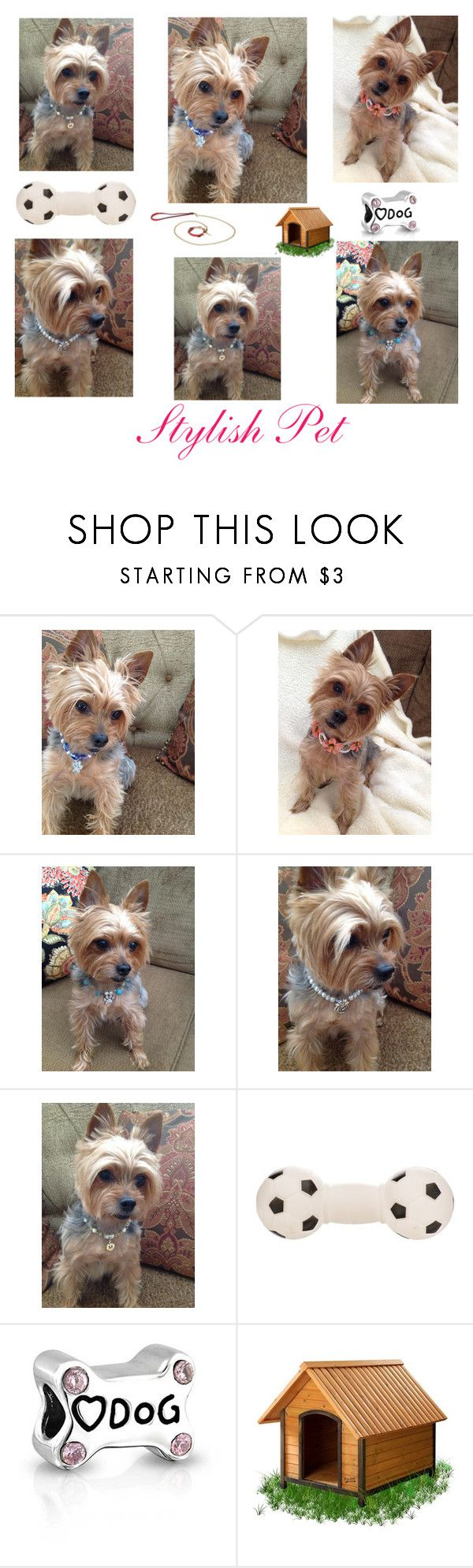 """""""Stylish Pet"""" by meeko789 ❤ liked on Polyvore featuring Bling Jewelry and Frida Firenze"""