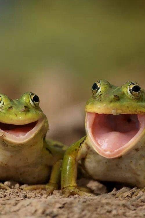 Happy Happy Frogs...