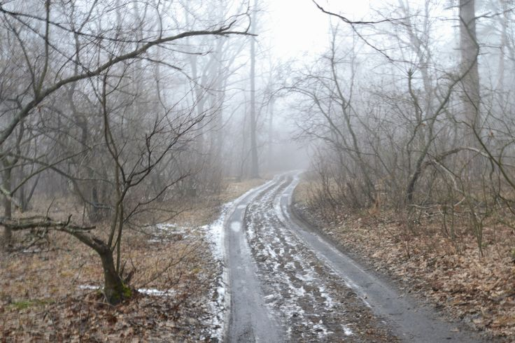 https://flic.kr/p/V8Z89A | A little frightening morning gloom of the spring forest.