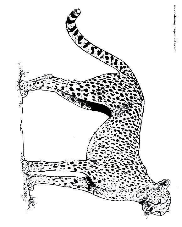 Cheetah color page Animal coloring pages, Cheetah