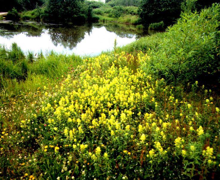 [4/15] W pozostałej części regionu utworzono kilka parków krajobrazowych. Na połączeniu Puszczy Gorzowskiej i Pojezierza Myśliborskiego znajduje się Barlinecko – Gorzowski Park Krajobrazowy. Na jego obszarze występuje flora i fauna bagienna, morenowe wzniesienia ze skałami wapienno-piaskowcowymi, grąd środkowoeuropejski, a także rezerwat z rybami łososiowatymi.