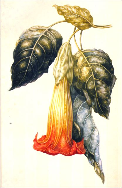 Botanical Illustration History