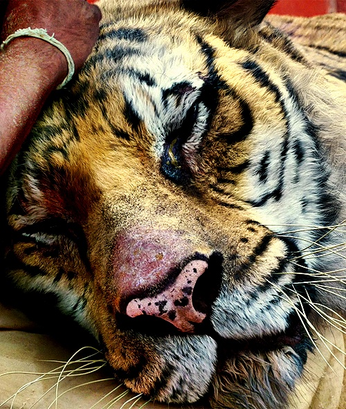 Animals have souls i have seen it in their eyes for Life of pi characters animals