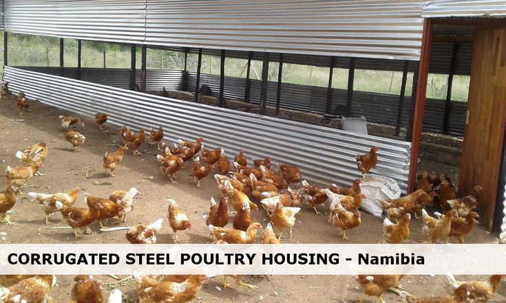Broiler Housing In Oshana Region Namibia Poultry Business Chicken Coop Plans