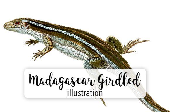 Madagascar Girdles Lizard Graphic By Enliven Designs Creative Fabrica Lizard Illustration Design Clip Art
