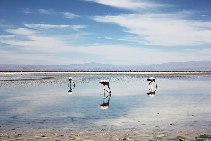 Chile Fotos Laguna Chaxa