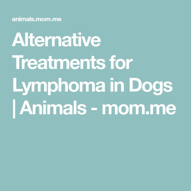 Alternative Treatments for Lymphoma in Dogs | Animals - mom.me