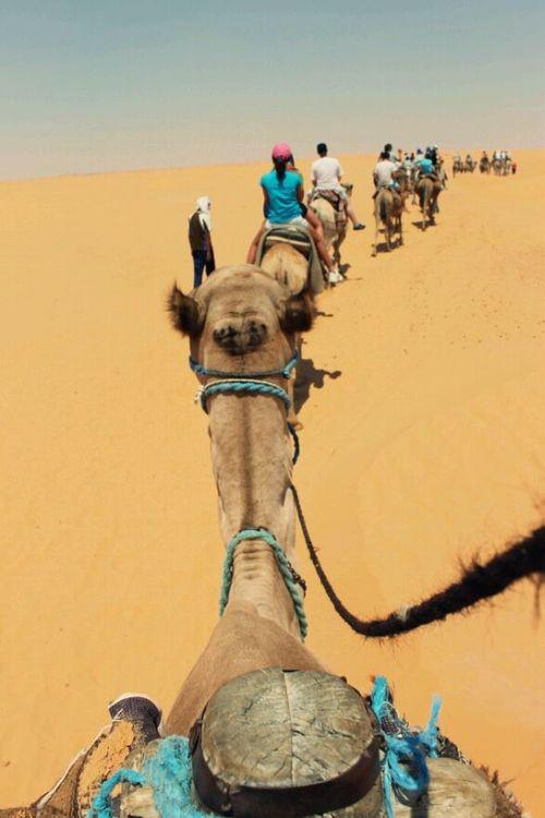 Camel Trek in the Sahara, Tunisia