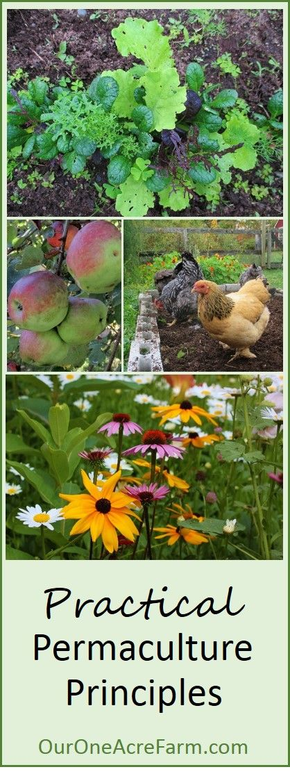 These 9 permaculture principles are based on the concept of mimicking Nature. Suggestions and examples are given, so you can implement them in your own garden or farm. This is permaculture explained for practical people, without the political, social, and ethical dimensions.
