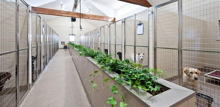 Kickapoo Ranch Pet Resort - Luxury Dog Boarding Kennel Near Houston TX