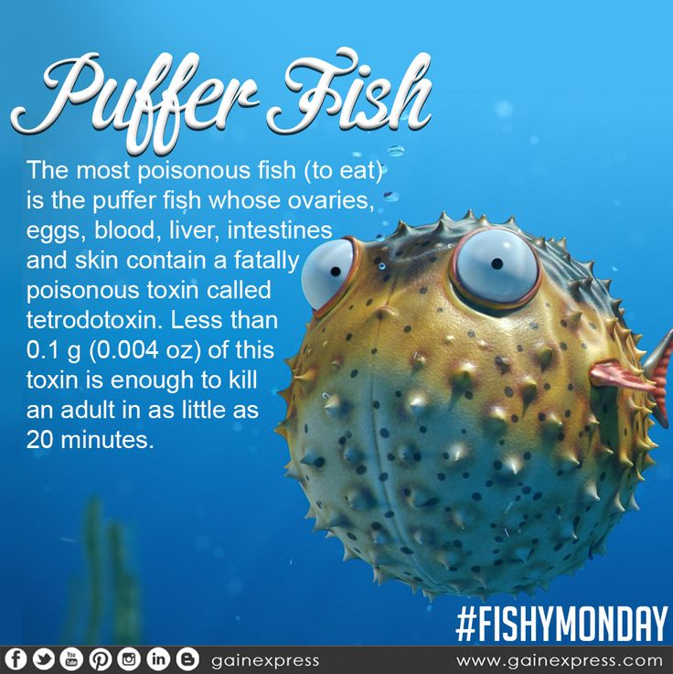 But in japan puffer fish is considered a delicacy for Is fish considered meat
