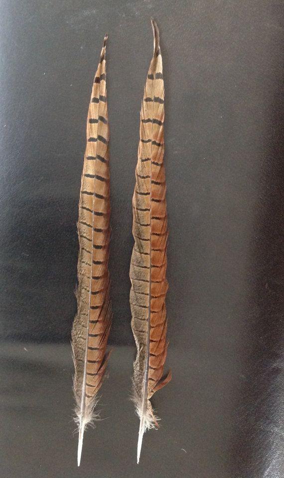 Prachtige superlange staartveren fazant veren door DeKeukenVanHegge