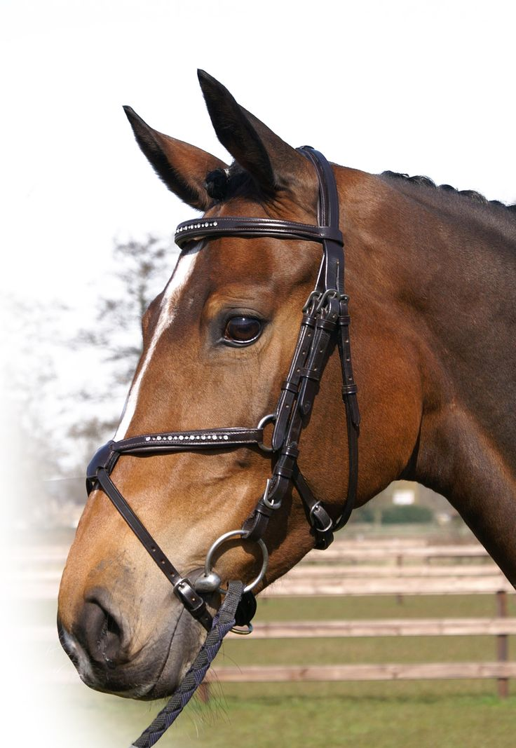 QHP Swarovski Grackle Leather Bridle