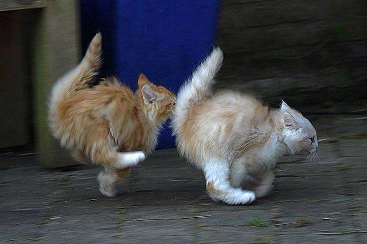 Speed kittehs