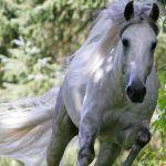 Caballos, razas de caballos, fotografías y videos de caballos - El Mundo del Caballo