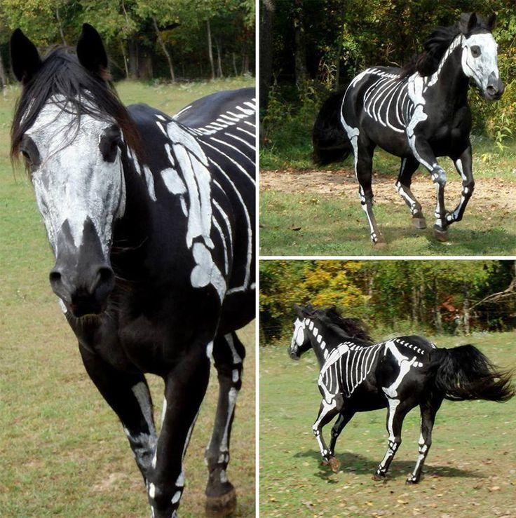 Des animaux déguisés en squelettes pour Halloween   animaux deguises en squelettes pour halloween cheval