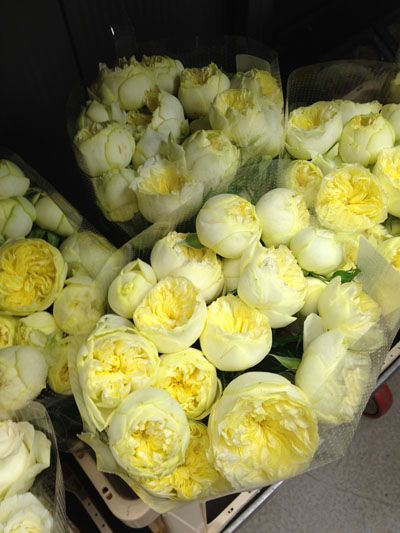 pale yellow garden roses. I am going to grow these and I can't wait!!!!