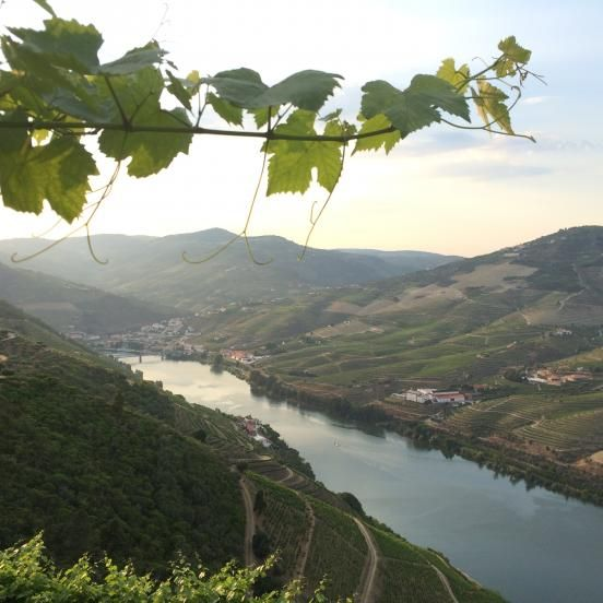 In the green valleys of the Alto Douro wine region